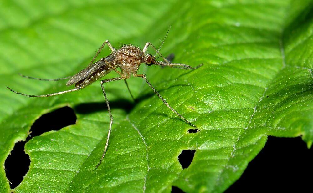 считают комары в природе картинки бантик для обновления